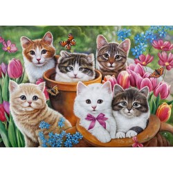 Maatalon kissat...