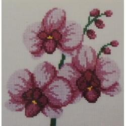 Punaiset orkideat...