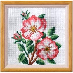 Villiruusu-ristipistotaulu